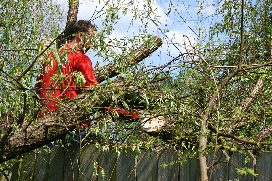 euless-tree-service-company-services_orig