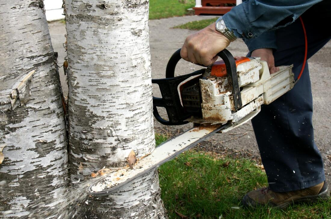 euless-tree-service-company-tree-removal-disposal-2_orig