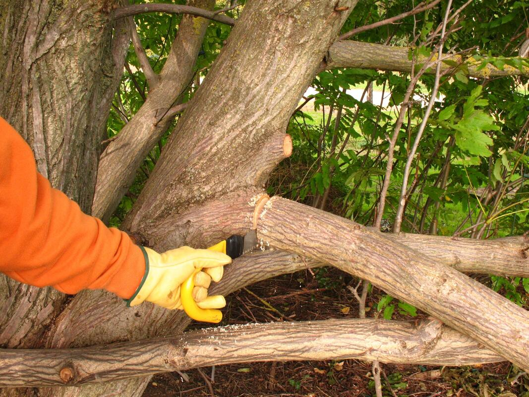 euless-tree-service-company-tree-shrub-trimming-2_orig